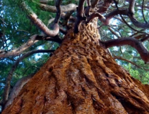 THICH NHAT HANH: Lidando com as emoções difíceis como uma árvore