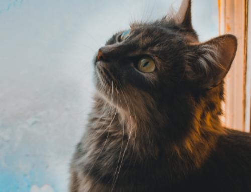 O que diferencia os humanos dos animais?
